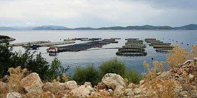 Pesci e allevamenti intensivi, un'agonia che va fermata