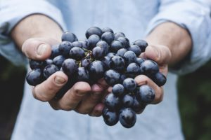 frutta di stagione settembre