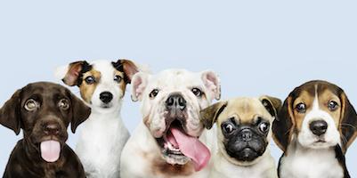 Come scegliere i croccantini per cani