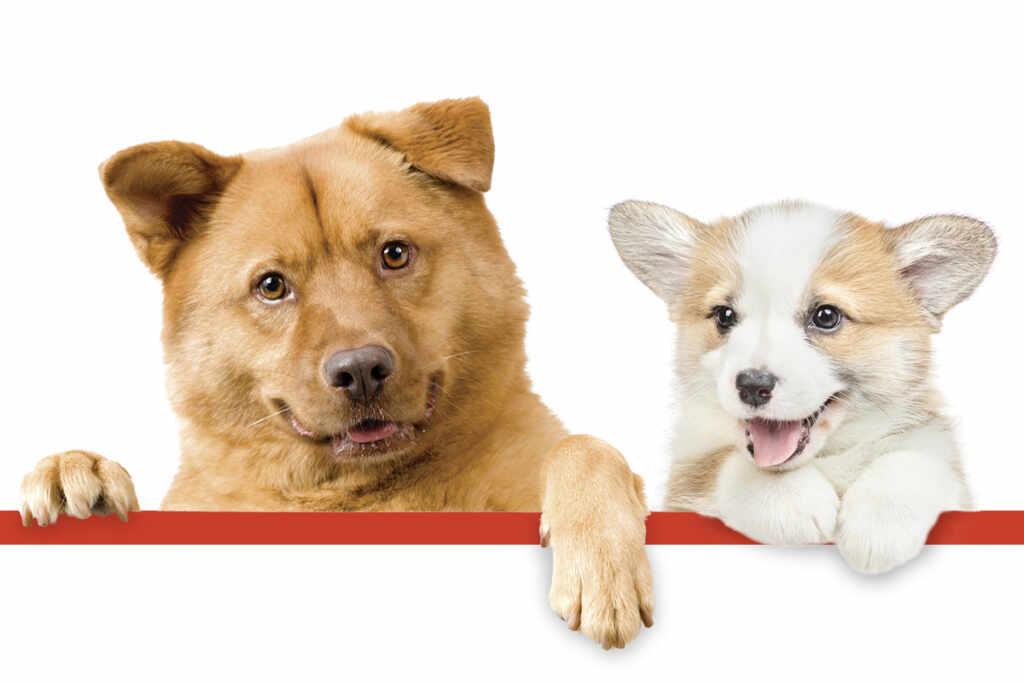 cibo sano per cani