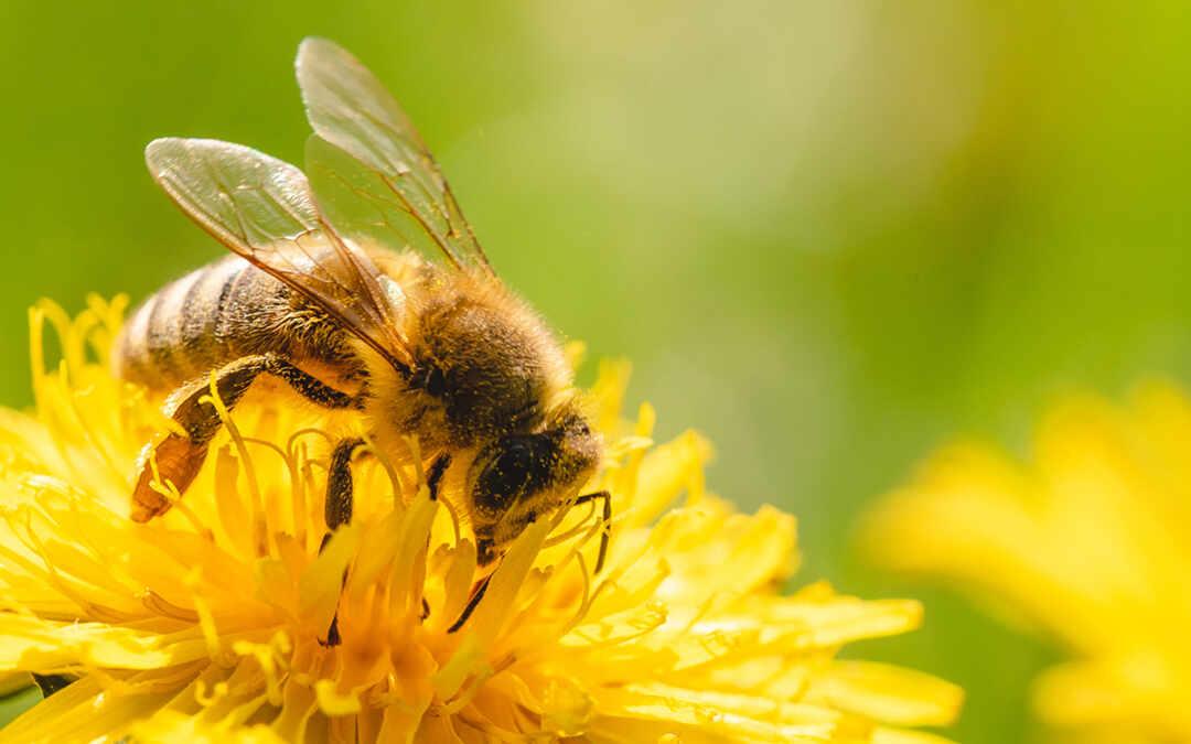 le api