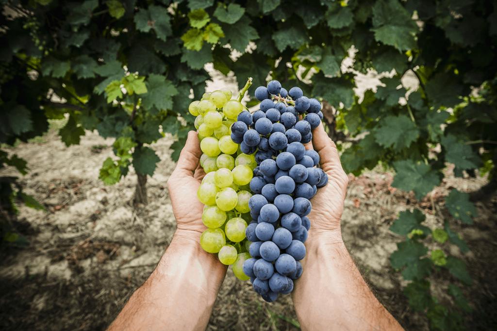 proprietà-benefiche-dell'uva